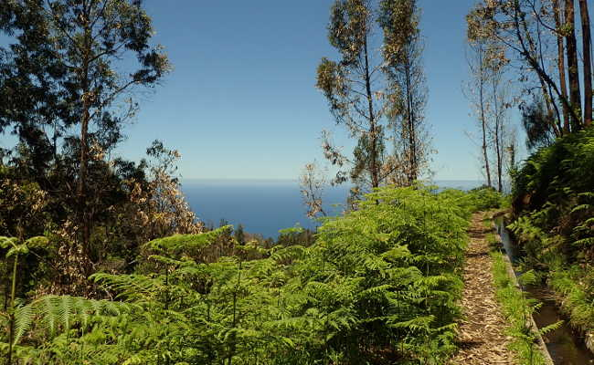Wandern in Ponta do Pargo